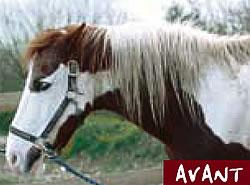 Die Pferdemähne